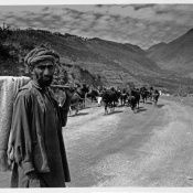 India, Cachemire, mandriano, 1980.